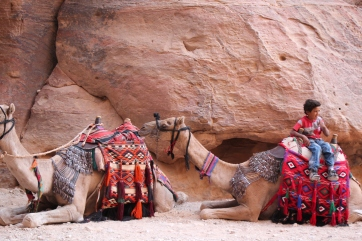 Two camels await guest riders in Petra